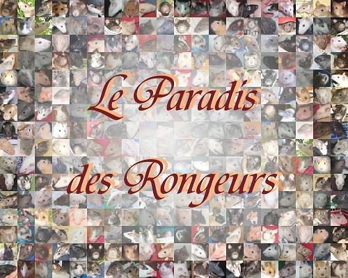 Le Paradis des Rongeurs