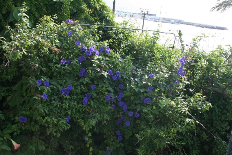 Magnifique mais au jardin forum de jardinage for Cote hors gel
