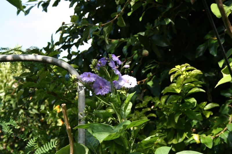 Forum jardin au naturel apr s l 39 oiseau la liane de paradis for L oiseau jardinier