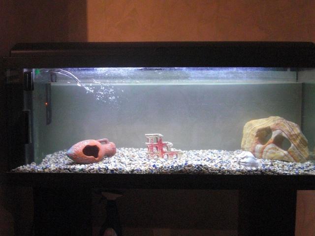 mon 1er aquarium 100 litres. Black Bedroom Furniture Sets. Home Design Ideas