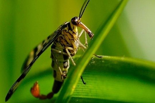 Animaux sauvages animaux aux couleurs chatoyantes - Mouche jaune et noire ...