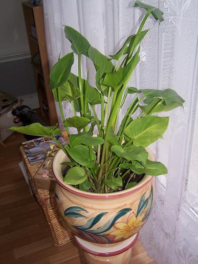 plante verte qui pleure