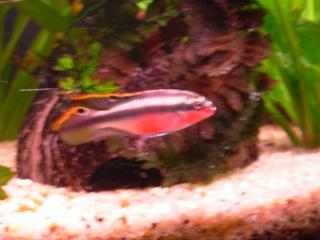 Quels poissons pour mon aqua for Bac a poisson 2000l
