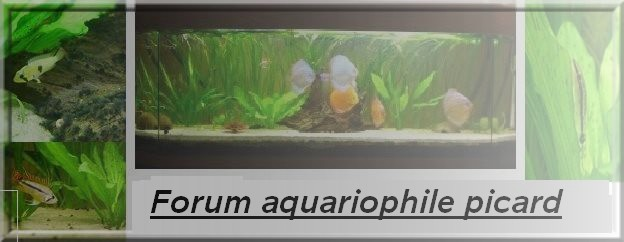 Forum aquariophile picard