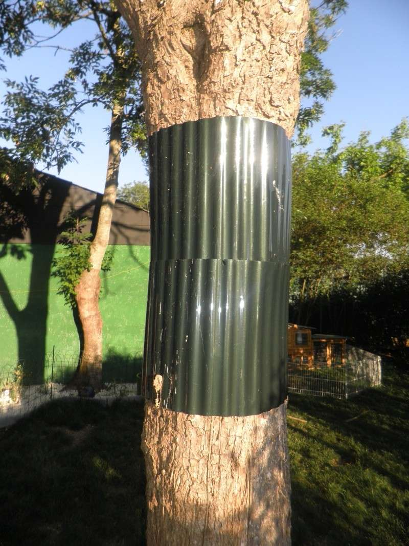 protection chat jardin