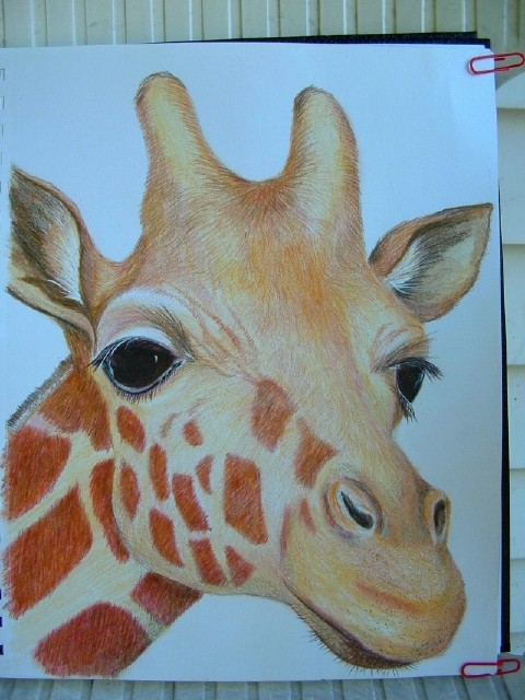 Portrait d une girafe for Prix d une girafe a poncer