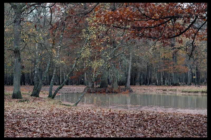 sortie parc animalier de clairefontaine 78 le 10 11 2007