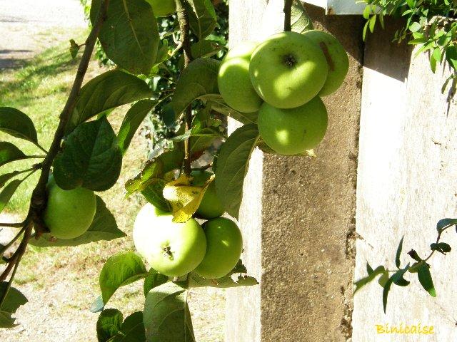 Promesses de récoltes. dans Fleurs et plantes p8090912