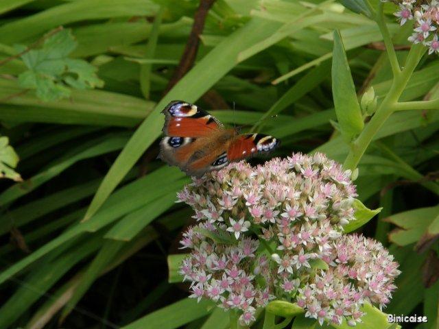 Papillon . dans Animaux p9282110