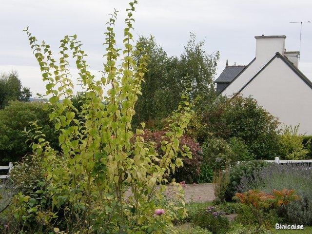 Automne dans le jardin. dans Jardins et maisons p9302110