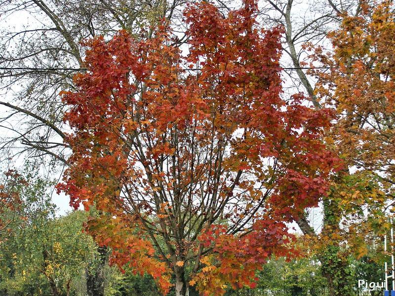 Feuilles d'automne... dans Fleurs et plantes pa285518