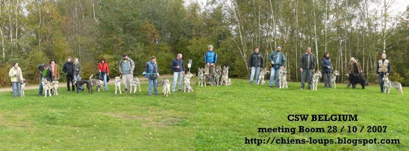 meeting du club belge des chiens-loups de tchecoslovaquie
