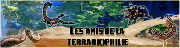 Forum des amis de la terrariophilie