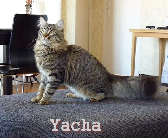 yacha10.jpg