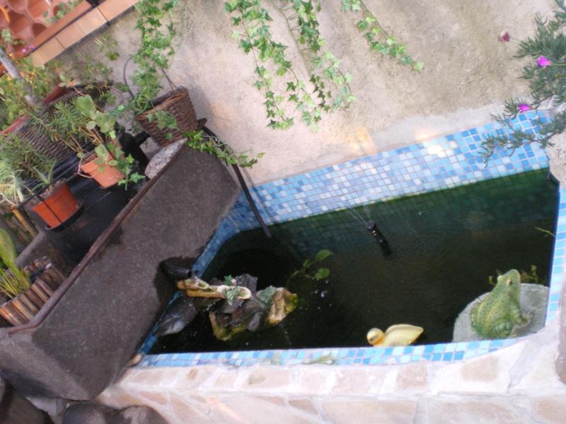 Mon bassin ext rieur hors sol for Bassin exterieur hors sol