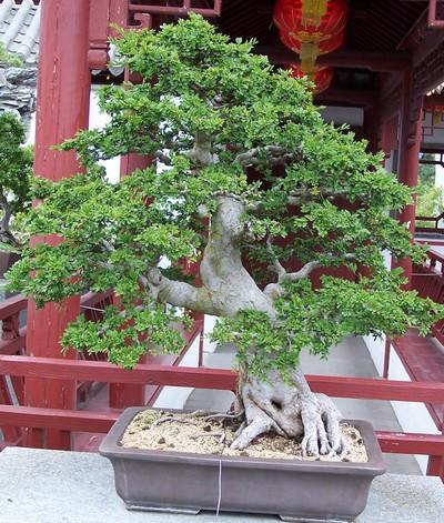 Jardin botanique montreal penjing for Jardin botanique 78