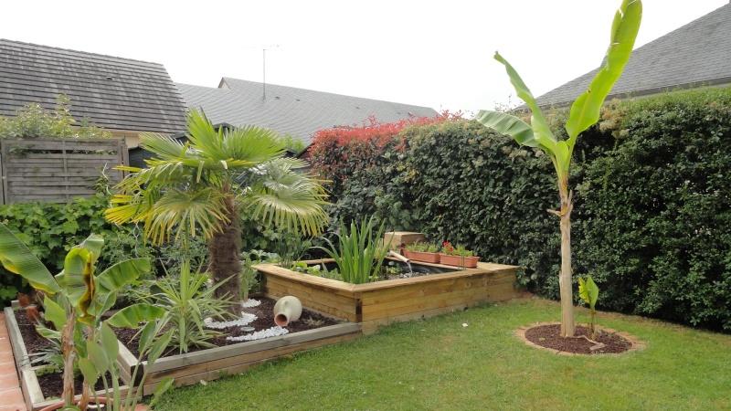 Le forum des fous de palmiers 53 mon petit jardin en - Beau petit jardin ...
