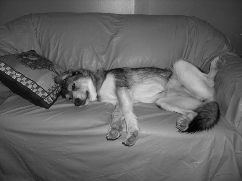 votre chien est il autoris 233 a monter sur le canap 233