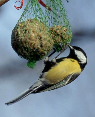 les aliments bon ou mauvais pour nos oiseaux sauvages oiseaux club du pays d 39 herbauges. Black Bedroom Furniture Sets. Home Design Ideas
