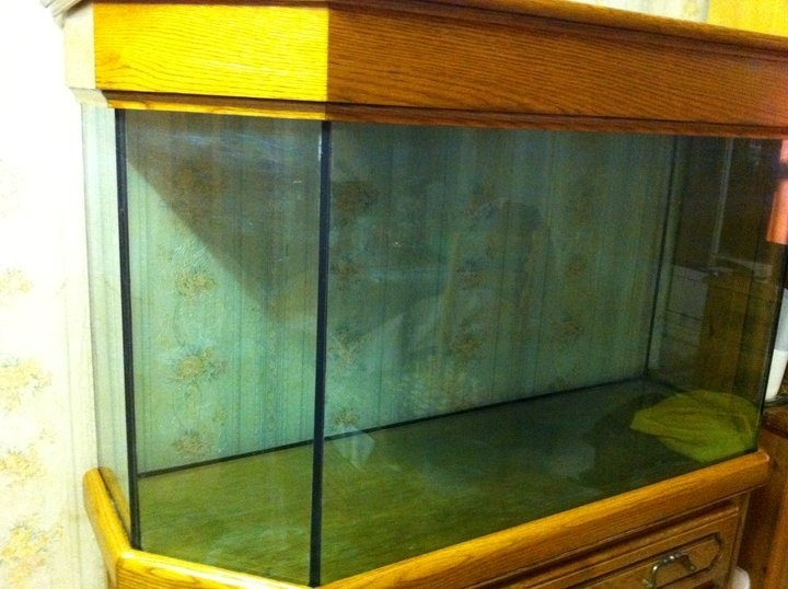 Probleme Decor Artificiel Aquarium