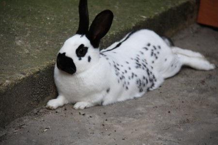blogs de lapins bienvenue chez les lapins du forum. Black Bedroom Furniture Sets. Home Design Ideas