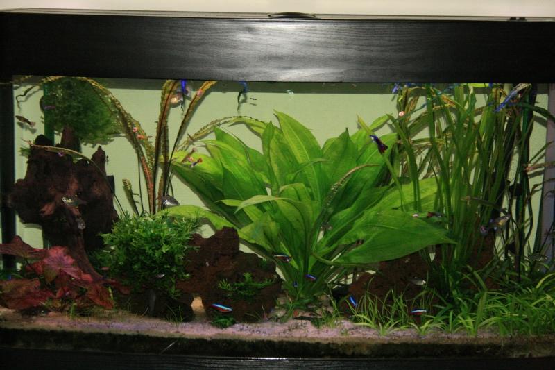 les clich s de nos plantes aquatiques palustres page 3 les plantes et algues eau douce. Black Bedroom Furniture Sets. Home Design Ideas
