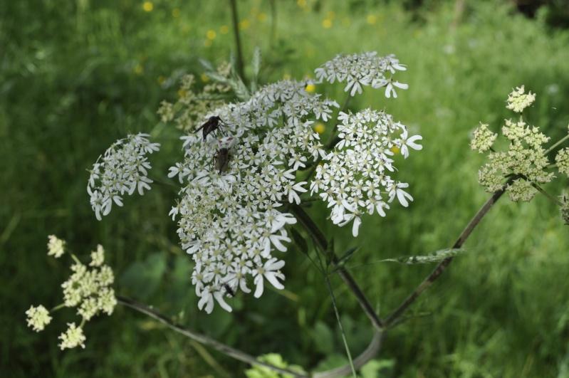 Les plantes toxiques pour les chevaux page 2 for Plante urticante