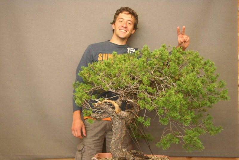 pinus sylvestris bonsai