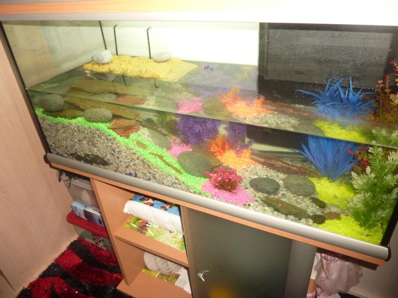 Mes nouvelles tortues sont elles sous de bonnes conditions for Aquarium tortue