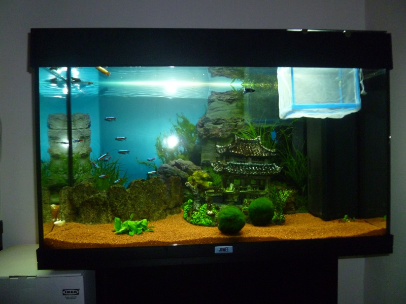 mon aquarium 120 litres. Black Bedroom Furniture Sets. Home Design Ideas