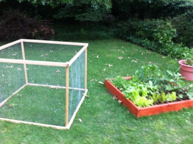 Squirrels Wire cages and Trellis on one end what to do