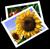 https://i22.servimg.com/u/f22/16/42/68/94/pictur10.png