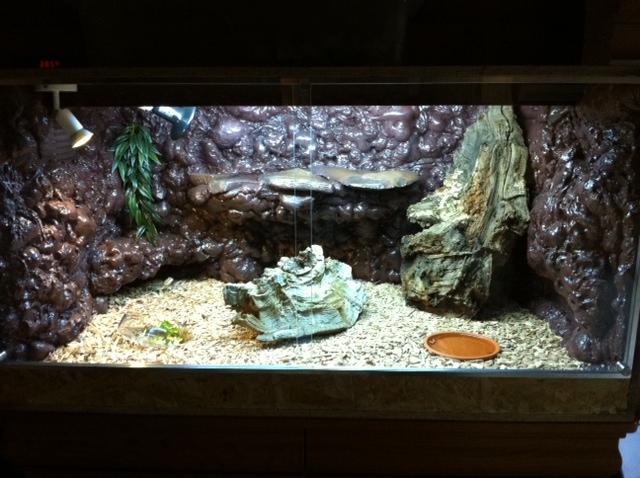 Terrarium pogona - Decor fond terrarium desertique ...