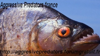 Aggressive Predators FRANCE